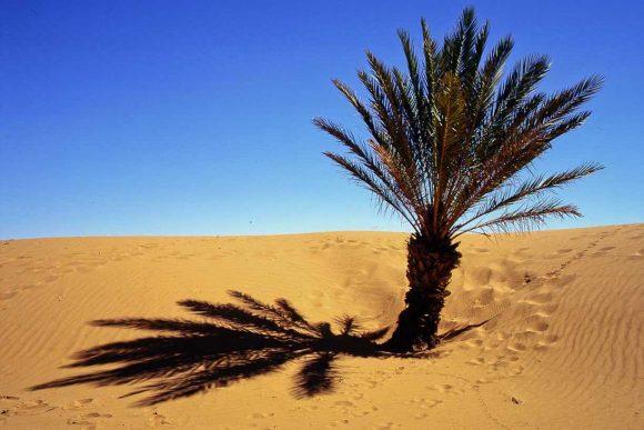 Private Desert Tour